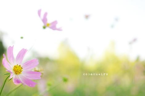 pink3_20121119212051.jpg