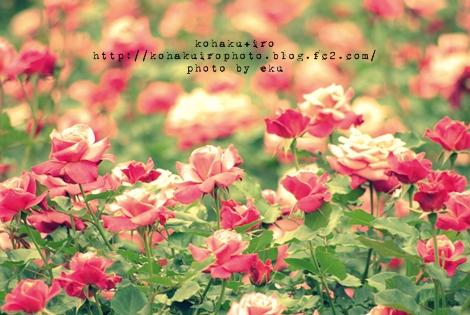 pink_20120519020144.jpg
