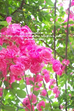 pink_20120626231647.jpg