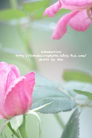 pink_20120626233743.jpg