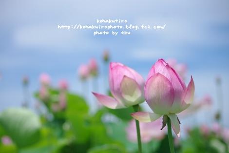 pink_20120720204858.jpg
