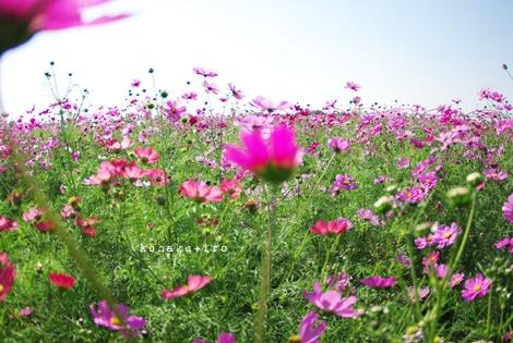 pink_20121119215100.jpg
