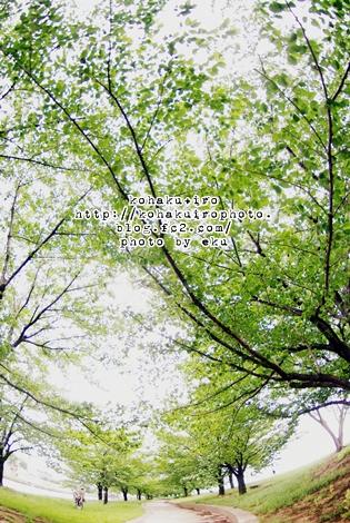 sakura_20120522141122.jpg