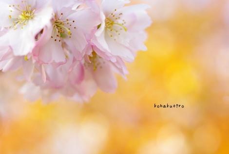 sakura_20121212222347.jpg