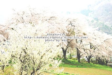 sakurairo3.jpg