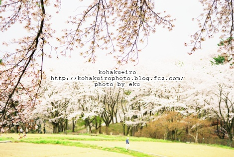 sakurairo4.jpg