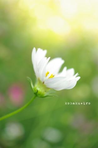 siro2_20121119211325.jpg