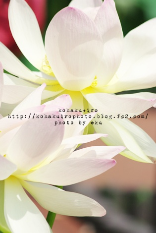 siro_20120731163801.jpg