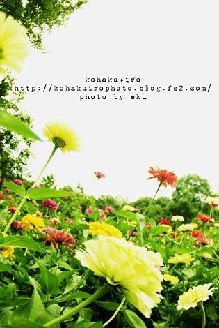 siro_20120803120456.jpg