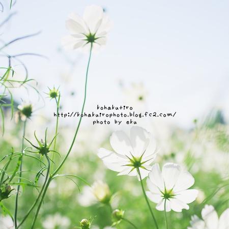 siro_20121018174040.jpg
