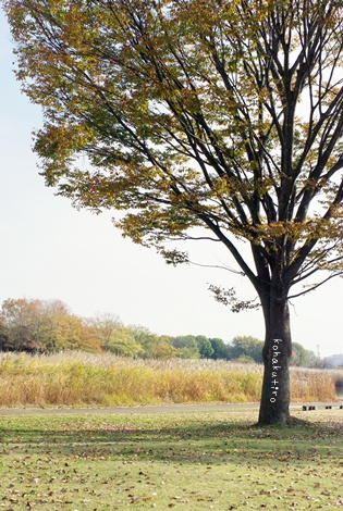 tree4_20121205210148.jpg