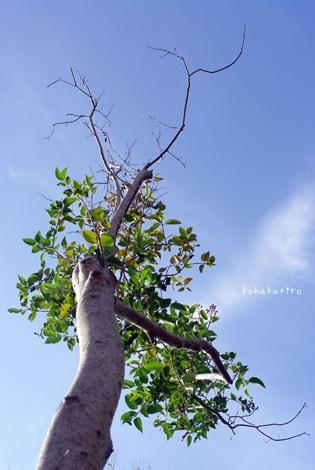 tree_20121205204328.jpg