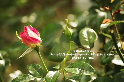 tubomi_20120626234137.jpg