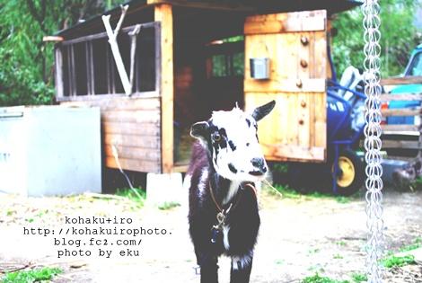 yagiiro.jpg