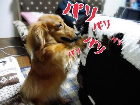 CAEPOYI4_convert_20140921145505.jpg