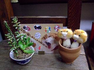 2012_0317三日月豆0049