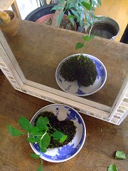 2012_0324三日月豆0034