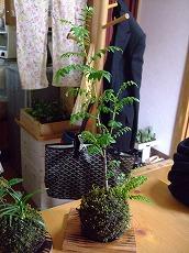 2012_0427三日月豆0017