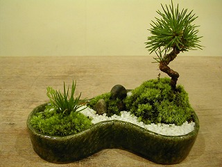 ひょうたん苔庭2