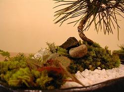 ひょうたん苔庭4
