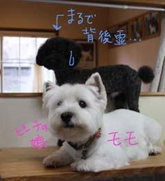 blogIMG_3281.jpg