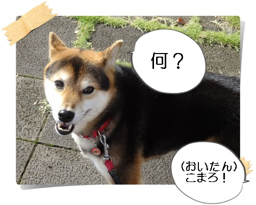 komaro20140927_2.jpg