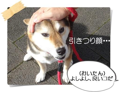komaro20140927_3.jpg