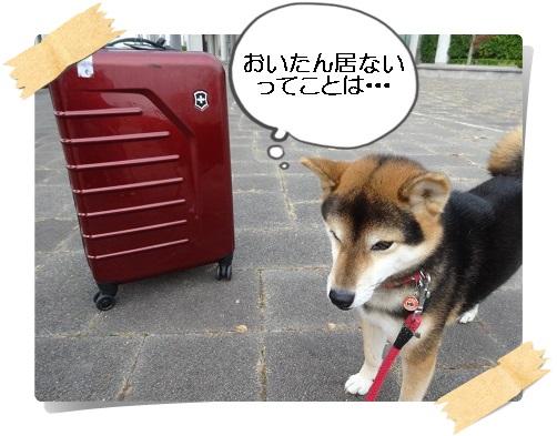 komaro20141012_3.jpg