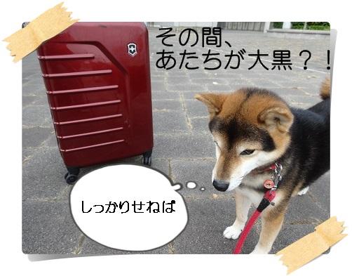 komaro20141012_4.jpg