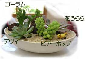 多肉植物の名前