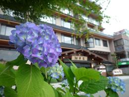 0626紫陽花と湖南荘