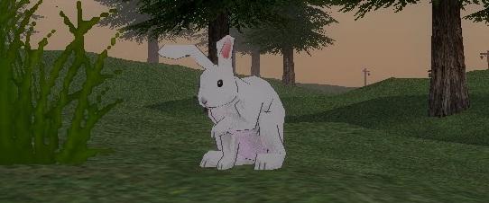 ウサギに変身!