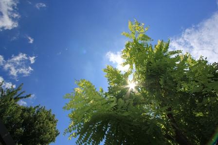 IMG_0056-tree2.jpg