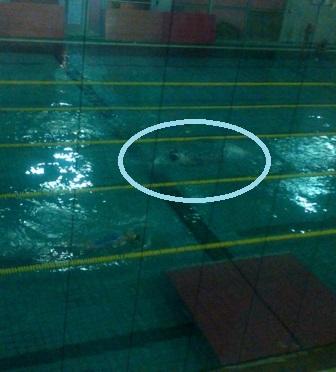 01swim 11