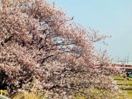 20110412花見05