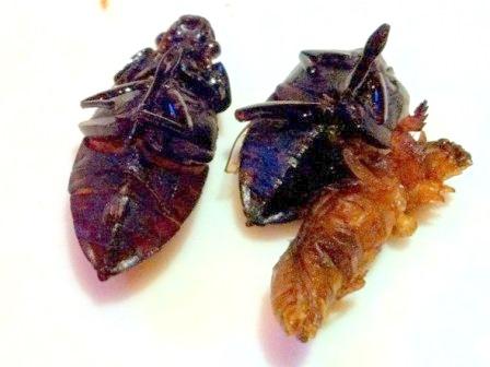 20111031昆虫食3