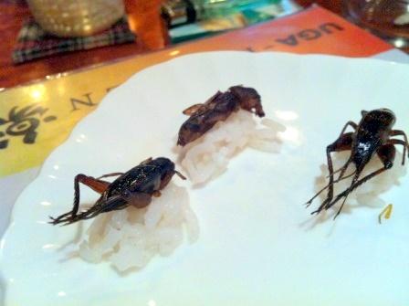20111031昆虫食9