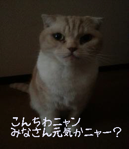 編集_099_convert_20121117131257