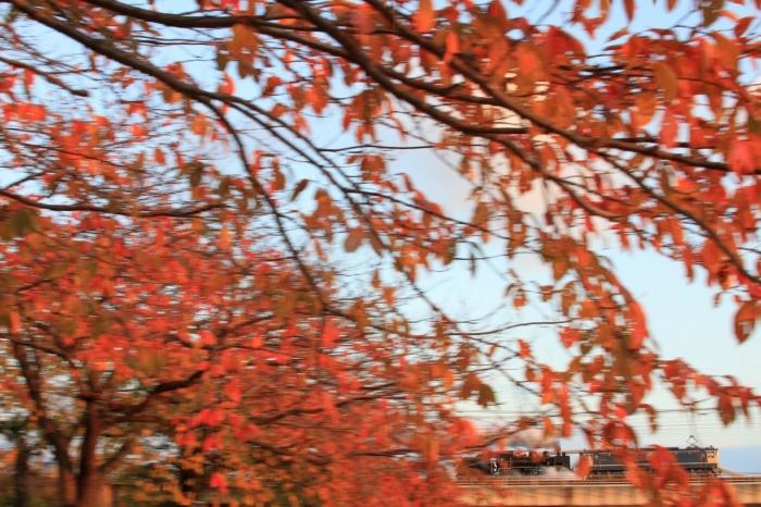 12.11.15 SL回送木流し 石山~瀬田