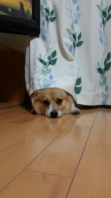 20120827_211200_1.png