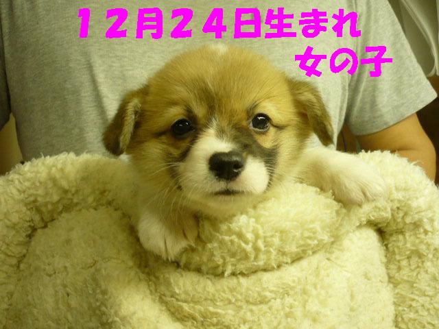 子犬写真1
