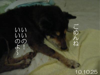 10102502.jpg