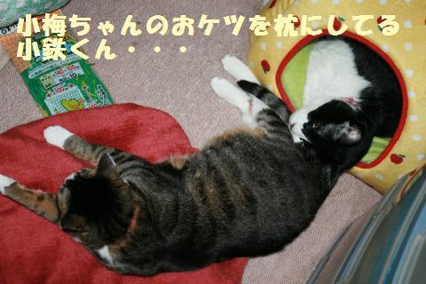 001_convert_20120526215900.jpg