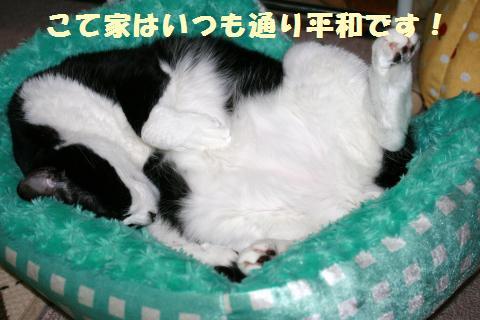 002_convert_20120616221524.jpg