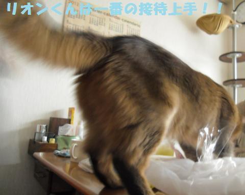 003_convert_20120708164044.jpg