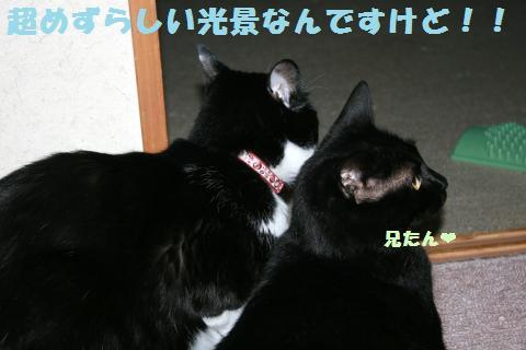 007_convert_20120605193423.jpg