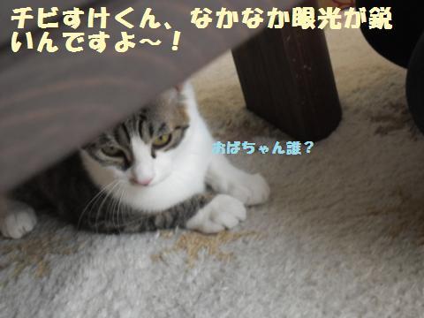 008_convert_20120317203003.jpg