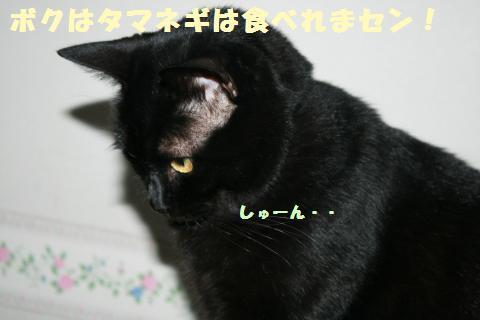 009_convert_20121118210106.jpg