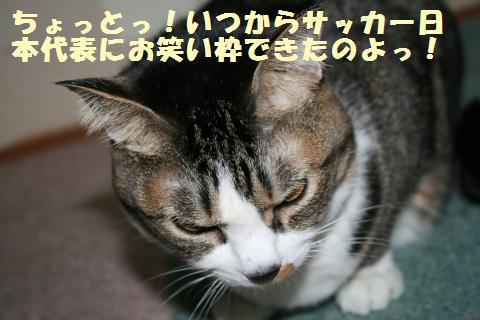 010_convert_20120329230046.jpg