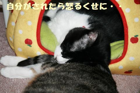 011_convert_20120526220150.jpg